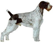 Medium to large sized dogs can still be fine for smaller homes, such ...